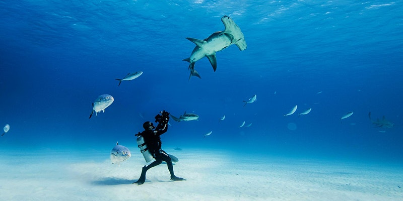 SCUBA Diver walking across sea bed with fish surrounding