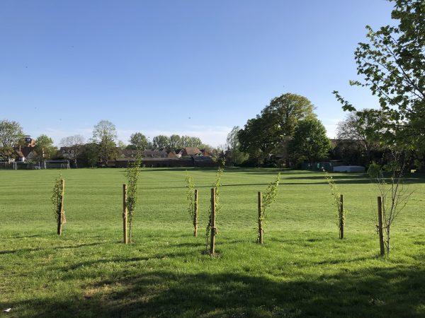 Abingdon School designated conservation areas